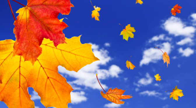 Weekender_Fall-maple-leaves-background-3740a9
