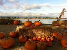 weekender_pumpkin